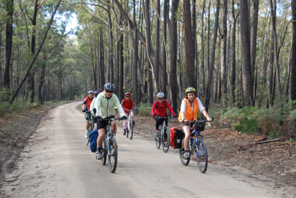 Forestry road adjacent to the East Gippsland Rail Trail