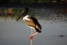 Jabiru, Northern Territory, Australia