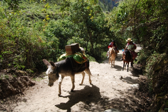 Local women use donkeys to carry supplies to their village