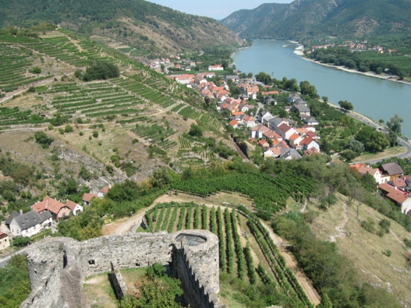 View across vineyards from the Hinterhaus ruins