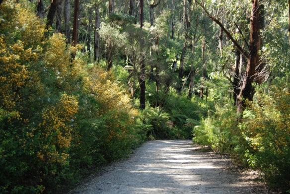 Mount Oberon trail