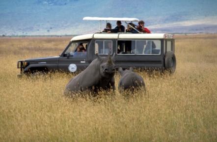 Rhinos, Ngorongoro Crater, Tanzania