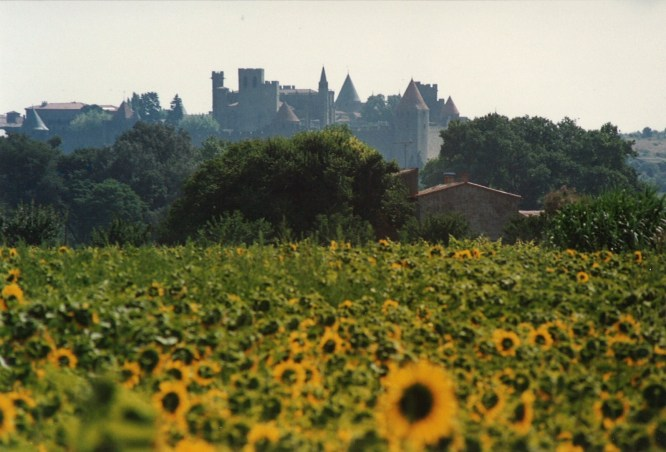 View of Carcassonne from sunflower field