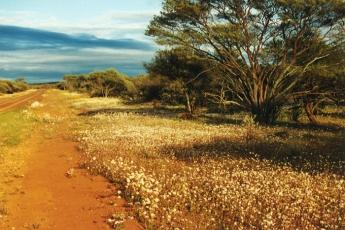 Seeing carpet wildflowers in Western Australia