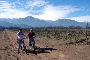 Cycling through Chilean wineries