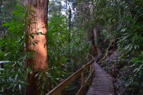 Huon Pine Walk