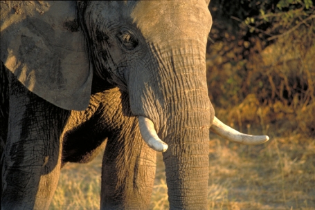 Being in a truck surrounded by elephants in Botswana