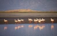 Seeing flamingos in Ngorongoro Crater, Tanzania