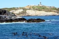 Volunteering on Montague Island in Australia