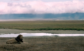 Seeing a lion in Africa