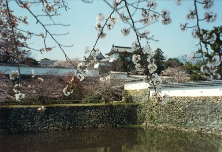 Cherry blossoms at Himeji Castle