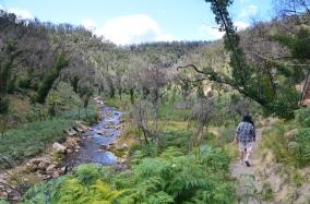 Walk from MacKenzie Falls to Fish Falls