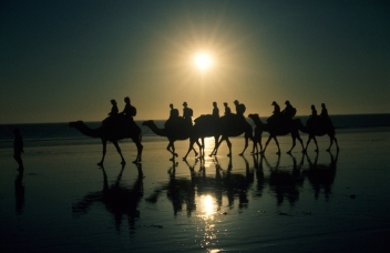 Untitled_002 Broome Camels Silhouette