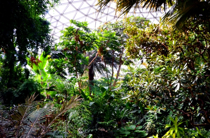 Bloedel Conservatory aka heaven's Garden