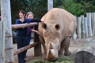 Slumber safari experience at Werribee Zoo